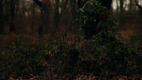 Skog lager videofilmer