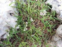 Skog av ayin för Rosh mummel` Arkivbilder