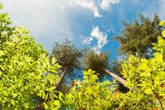 Skog av Belgien Arkivfoton