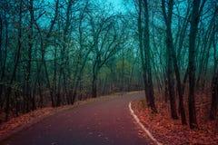 Skog av dödaen Arkivfoto