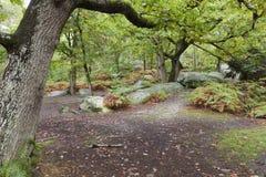 Skog av Fontainebleau Arkivbilder