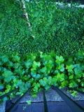 Skog av gröna sidor upp och ner royaltyfri foto