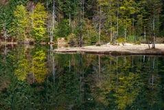 Skog av gröna träd som reflekterar i den lugna sjön Royaltyfria Bilder