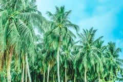 Skog av palmträd mot himlen arkivfoto
