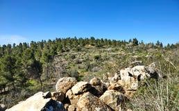 Skog av Sataf som ?r v?stra av Jerusalem Israel Ett h?rligt omr?de av att fotvandra fotografering för bildbyråer