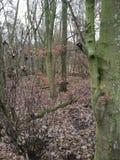 Skog av Tree& x27; s Fotografering för Bildbyråer