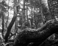 Skog av trees royaltyfri foto