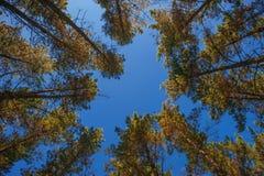 Skog av trees v?g f?r skogkohmak gr?n natur royaltyfri foto