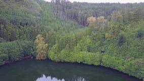 Skog - Azores, Portugal arkivfilmer