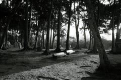 Skog, bänk och kojor på stranden royaltyfria foton
