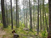 Skog dal av under, Frankrike Arkivbilder