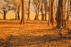 Skog & djurliv Arkivfoton