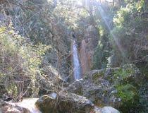 Skog dold vattenfall Arkivfoto