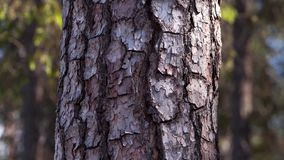 skog 2 Effekt för 5 D - flyttande träd lager videofilmer