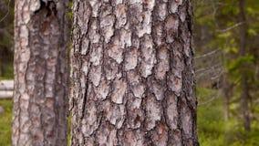skog 2 Effekt för 5 D - flyttande träd arkivfilmer