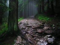 Skog efter regn royaltyfri bild