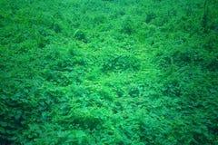 Skog eller gröna växter för motiv och naturligt arkivbild