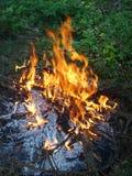 skog för 02 brand Arkivbild
