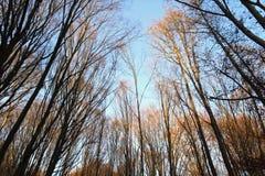 skog för 14 höst Royaltyfri Fotografi