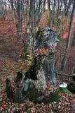 skog för 15 höst Arkivbilder