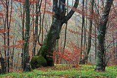 skog för 7 höst Arkivfoton
