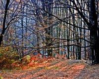skog för 8 höst Arkivbilder