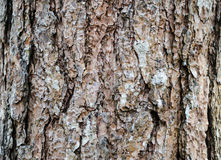 Skog för bakgrund för textur för trädskäll Arkivbild