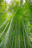 Skog för bambusockerrotting och ljust solljus. arkivbilder