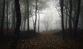 Skog för banahofantasi med mystisk dimma i natt royaltyfria bilder