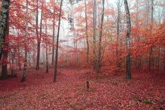 Skog för björkträd royaltyfri foto
