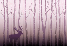 Skog för björkträd, vektor vektor illustrationer