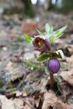 Skog för blomma på våren royaltyfria bilder