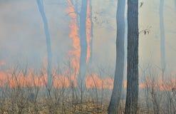 skog för 3 brand arkivfoton