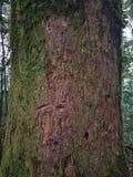 skog för doiinthanonnationalpark arkivfoto