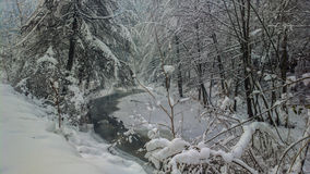 Skog för flod n för vintertid Arkivfoto