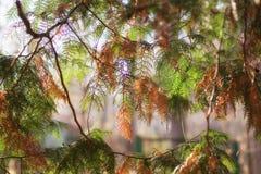 Skog för granfilialsolljus royaltyfri fotografi