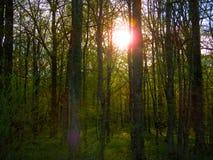 Skog för himmel för naturvattengräs Arkivbild