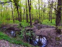 Skog för himmel för träavkloppgräs Royaltyfri Fotografi