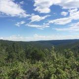 Skog för mil royaltyfria bilder