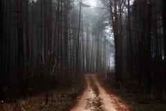 Skog för mystisk höst för morgon röd med vägen i dimma Dimmiga trän för nedgång Färgrikt landskap med den lantliga vägapelsinen f royaltyfria foton