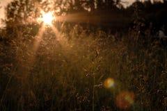Skog för natur för solnedgånggrässol Fotografering för Bildbyråer