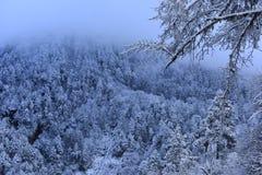 Skog för rimfrost för kinesHailuogou glaciär urtids- Arkivfoton