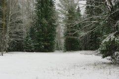 Skog för snö för säsongvårväder Royaltyfri Foto