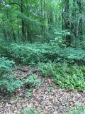 Skog för sommar` s Fotografering för Bildbyråer