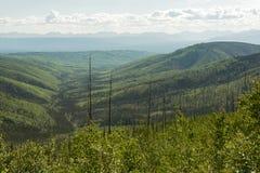 Skog för Tanana dalstat, Alaska Royaltyfria Bilder
