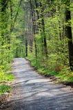 Skog för vandring på våren Arkivbilder
