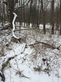 Skog för vinter` s Arkivfoton