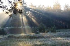 Skog f?r morgon p? v?ren fotografering för bildbyråer