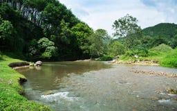 Skog flodlandskap med solig blå himmel Royaltyfria Bilder