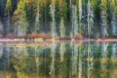 Skog fodrad bergsjö av träna royaltyfri foto